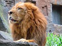Berlibur di Taman Safari Indonesia di Cisarua